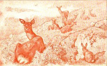 deer drawing by charles burton barber