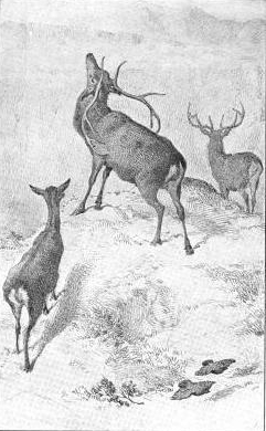 deer drawing by charles burton barber
